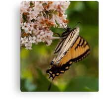 Our Butterfly Canvas Print