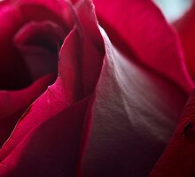 Rose Skin by Jeffrey  Sinnock