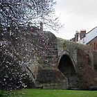 Blossom on the River Esk by Glaspark