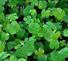 The Luck Of The Irish by Linda Miller Gesualdo