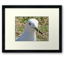 bird-Fly With me Framed Print