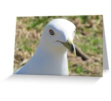 bird-Fly With me Greeting Card