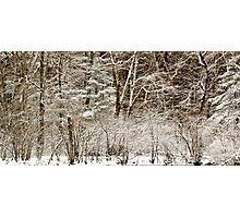 A fine Winter Coat Photographic Print