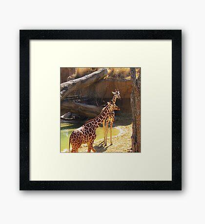 wild animals-friends Framed Print