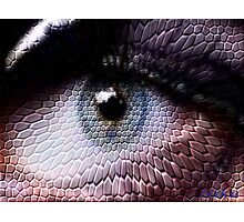 wild animals-eye Photographic Print