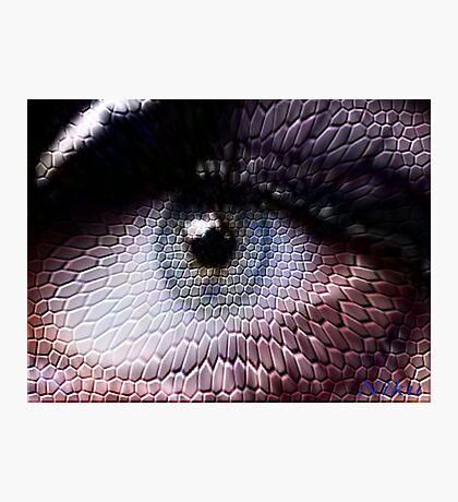 wild animals-eye Photographic Print