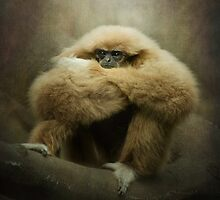Study of a Gibbon...the Thinker.. by polly470