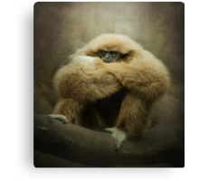 Study of a Gibbon...the Thinker.. Canvas Print