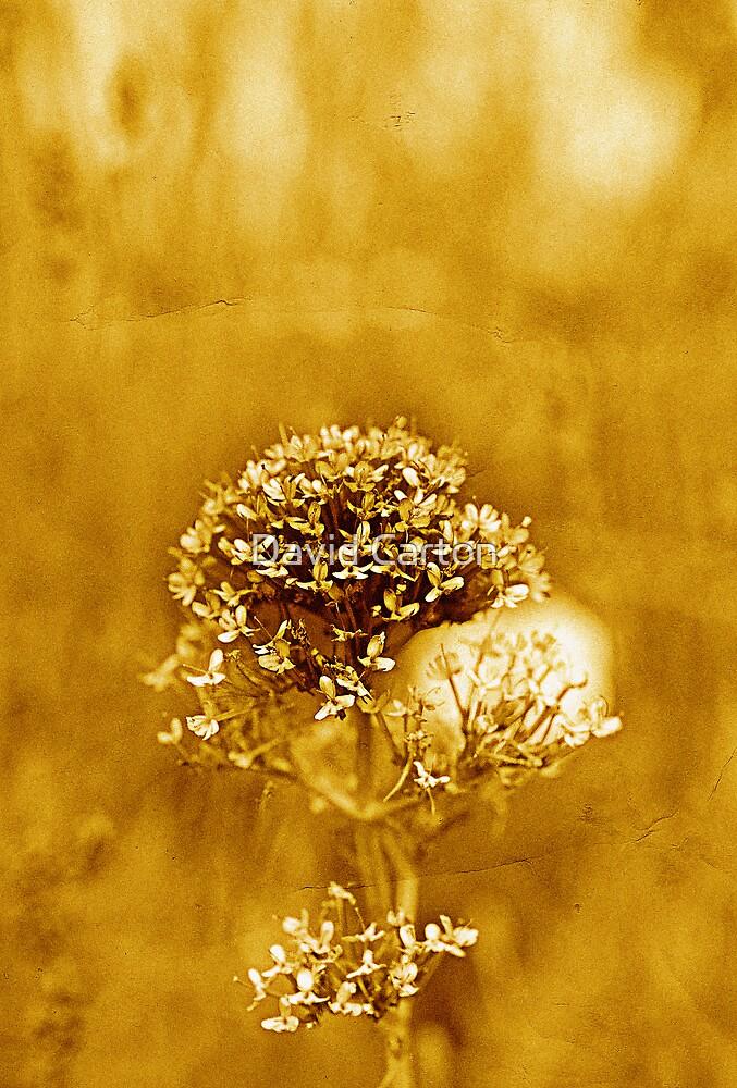 Golden moment by buttonpresser