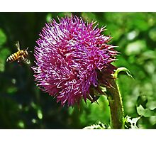 Nature. bee love Photographic Print
