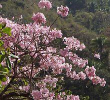 Blossoms - Flores by Bernhard Matejka