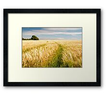 Barley Field in late summer Framed Print