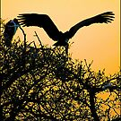 stork sunset! by Greg Parfitt