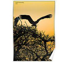 stork sunset! Poster