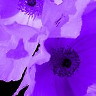 Purple Poppies iPhone Case by Betty Northcutt