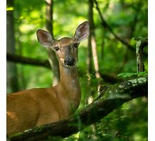 Young Doe Photographic Print