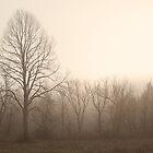 Treelift Study #106 by Bob Bagley