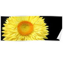 Yellow & Black Poster