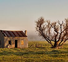 Old Shed and Tree No.4 by Julia Ott