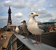 Blackpool Tower and Gulls by Paul Barnett