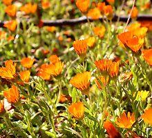 Flowers by Omar Dakhane