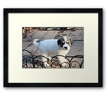 Oh, Hello I Am Jewell What Is Your Name?  Framed Print