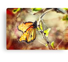 Spring Butterflies  Canvas Print