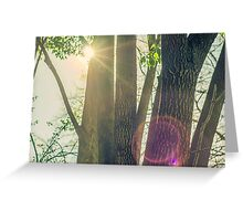 Trees in the Sunshine Greeting Card