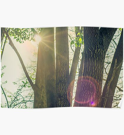 Trees in the Sunshine Poster