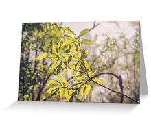 Fragile Leaves II Greeting Card