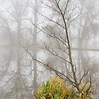 Small tree in the fog by BeardyGit