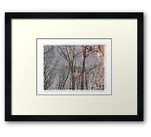 Reflection in Stream Framed Print