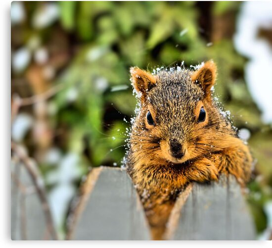 Posing for Peanuts by Melissa Carlini