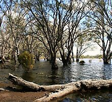 Flooded lake at Hattah by Matt  Carlyon
