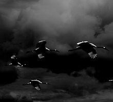 Seven by Jillian S.