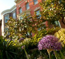 Flowers in a DC Neighborhood by Dan Lauf