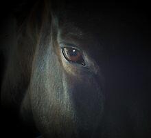 Dream Horse by jaeepathak