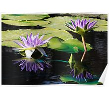 Midnight Caprice Water Lilies with Reflection Poster