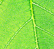 Green 2 by barnabychambers