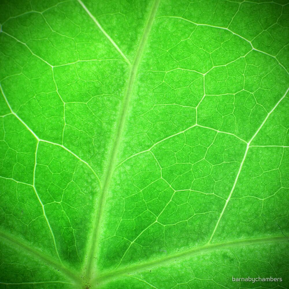 Green by barnabychambers
