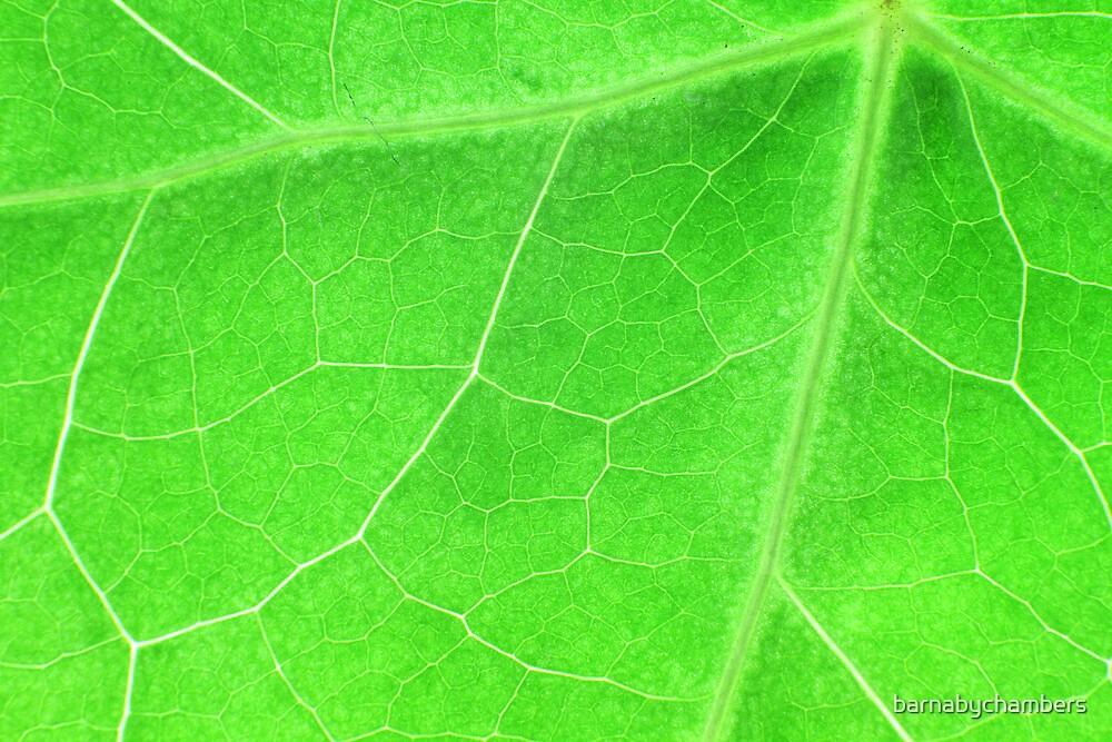 Green 4 by barnabychambers