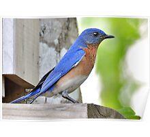 Mr. Bluebird Poster