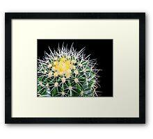 golden barrel cactus Framed Print