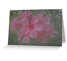 Oleander Flower Greeting Card