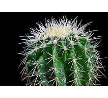 golden barrel cactus 2 Photographic Print