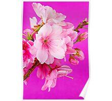 Cherry Blossom 3 Poster