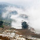 Rice Terraces in the Mist by barnabychambers