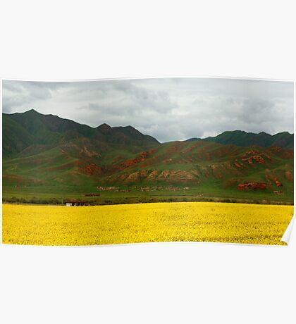 Gansu, China, flower filed Poster