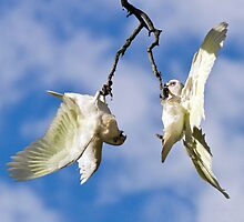 Crazy Corellas by Barb Leopold