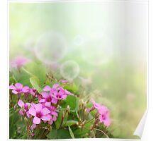 Spring Time Morning 2 Poster